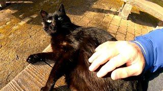 ベンチに黒猫がいたので隣に座ってナデナデしてきた