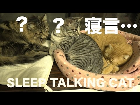 寝言を言うまると猫たちの反応