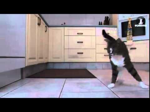 Видео, Эта Кошка Ломает Все Сложившиеся Стереотипы  Это Просто Невероятно