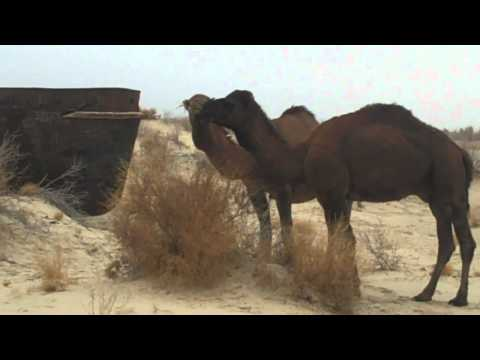 Raw Silk: Uzbekistan Travels Part II: Aral Qaraqalpaqstan