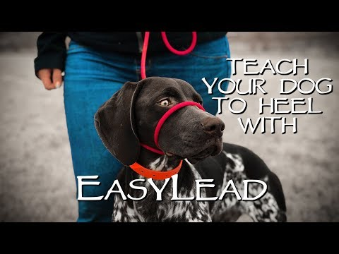 Teach My Dog to Stop Pulling Instantly - With EasyLead