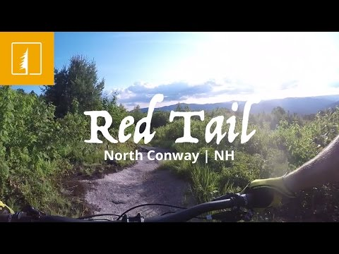 Red Tail | North Conway, NH