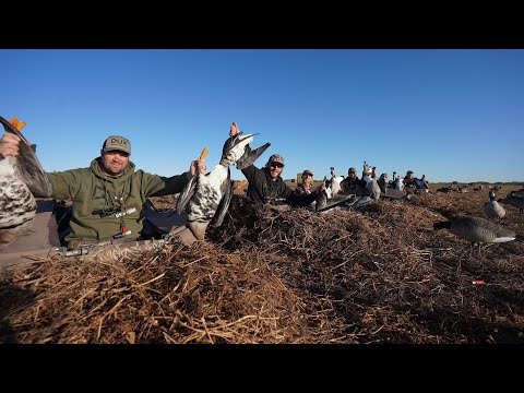 INSANE SPECKLEBELLY GOOSE HUNT IN THE PEA'S!! GOOSE HUNTING ALBERTA CANADA DAY 1