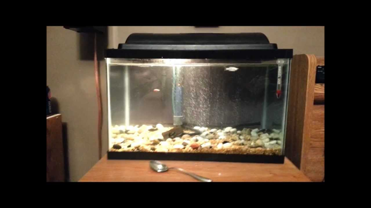 How to cure ich for freshwater fish youtube for Ick in fish tank