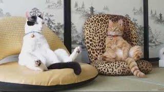 Лучшие приколы с животными, смешные приколы с животными, ржачные приколы с людьми и животными