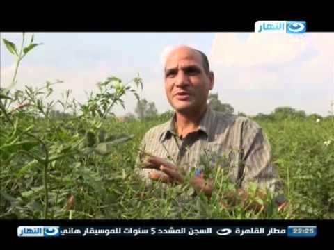 اخر النهار - شبرا بلولة .. قرية الياسمين