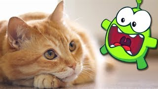 Download Om Nom Stories: Arrival Of Om Nom | Cat Fight | Cut The Rope | Funny Cartoons For Children Mp3 and Videos