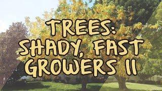 Trees: Shady, Fast Growers II