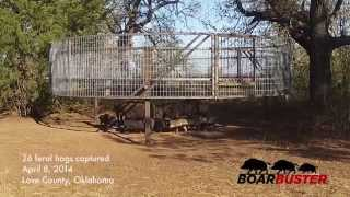 BoarBuster Feral Hog Trap Drop | Feral Hog Trapping