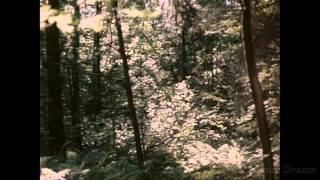 Песня о любви ( фильм