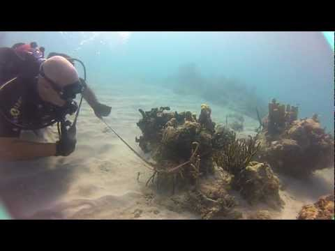 Hunting lobsters in Guantanamo Bay, Cuba