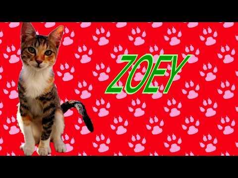 Zoey haciendo trucos (Zoey's tricks) - Cat tricks