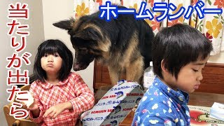 grandchild and #GermanShepherd #dog#Akita Inu #JAPANESEAKITA#秋田犬...