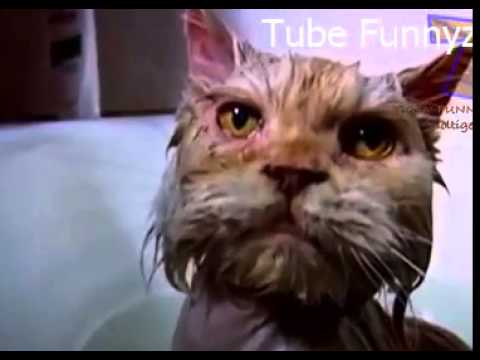 funny cats hate baths