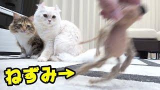 【猫vsネズミ】因縁の戦いがあっけなかった