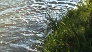 Рыболовные путешествия: FishCat