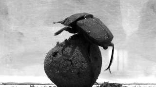 Dung Beetle Dance