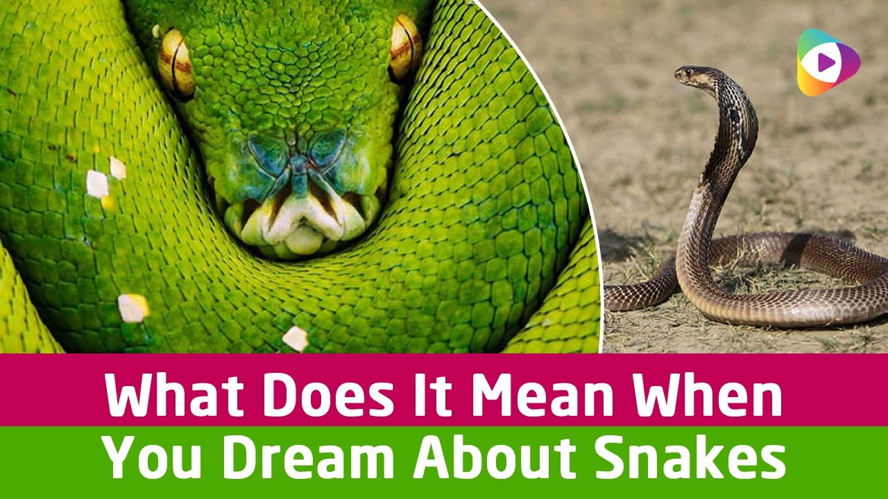 What does it mean when you dream about snakes tubeston youtube what does it mean when you dream about snakes tubeston biocorpaavc Image collections