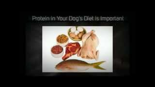 Homemade Raw Dog Food | Homemade Dog Food | Homemade Dog Biscuits | Homemade Dog Treats | Best