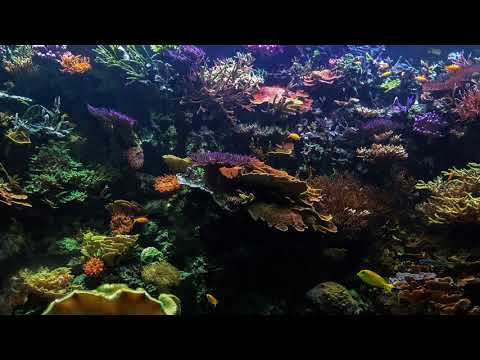 4 year timlapse of the 10000L Reef tank at The Maritime Museum & Aquarium
