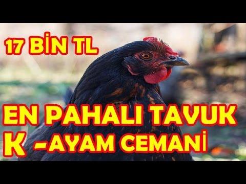 Dünyanın en pahalı tavuğu Kara Tavuk 8