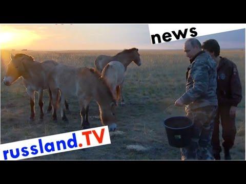 Putin als Pferdeflüsterer