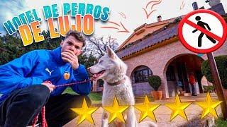 LLEVO A MI HUSKY A UN HOTEL DE PERROS DE LUJO ** hotel 5 estrellas de perros**