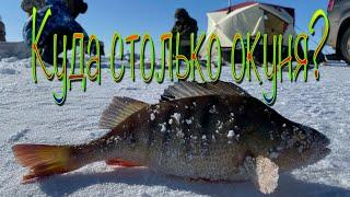 Лунка раздает крупного окуня Рыбалка на заповеднике Ловля щуки и окуня