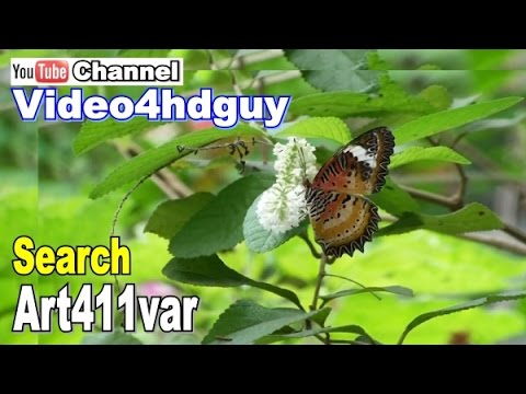 Butterfly Garden HD 3 hours Screensaver peaceful , relaxing, nature sound Video Art. | art411var™