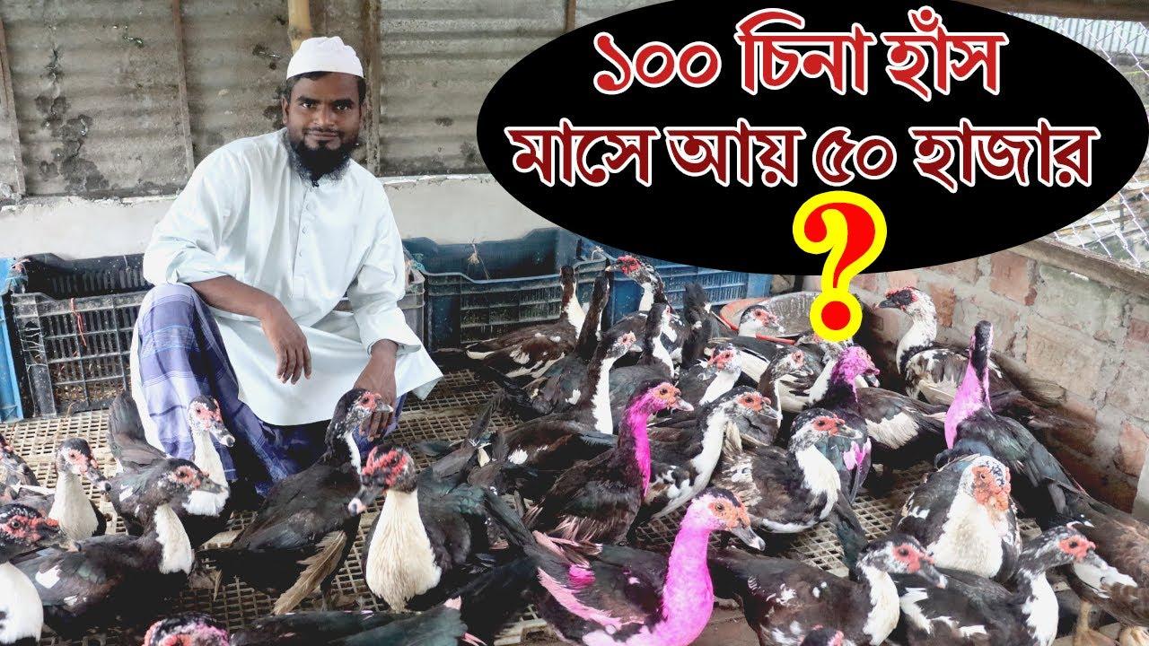 Download পানিবিহীন চিনা হাঁসের খামার।১০০ চিনা হাঁস পালনে আয় ৫০ হাজার টাকা।Muscovy Duck Farming