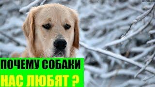 Почему собаки нас любят?