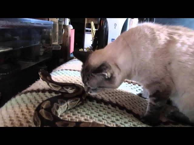 Cat And Snake Pals