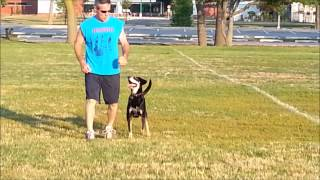 Dog Training On Long Island: Heeling With Willie