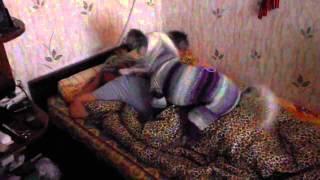 Кот Саймон в исполнении китайской хохлатой собаки, кошки приколы видео яички