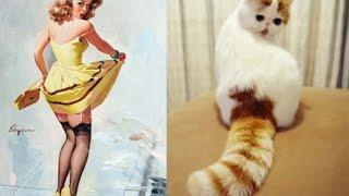 Девушки как кошки