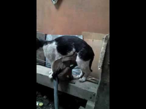 Full Download Monyet Sayang Kucing
