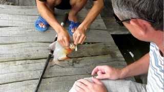 fishing to Cat Ba Island (рибалка о. Кат Ба, В'єтнам) 09/2012