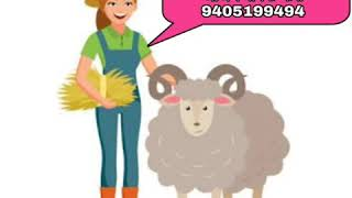 #LUCERN #GRASS #SEEDS #for sell #मेथी #गवताचे #बियाने #मिळतील