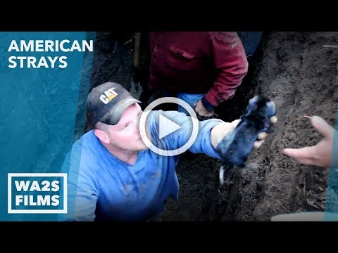 Animal Cops Detroit Rescue Tiny Puppy Deep in Pipe - Hope For Dogs | My DoDo