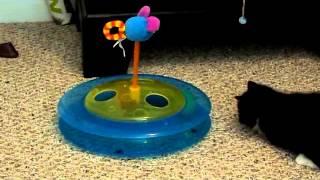 kitten asdfghjkl