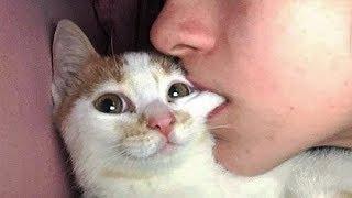 おかしい猫 - かわいい猫 - おもしろ猫動画 HD #257 https://youtu.be/-...