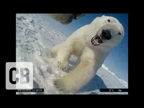 'Bear cam' captures the secret lives of polar bears
