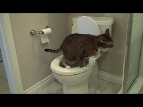 How to toilet train your cat an introduction youtube for Commode kitty