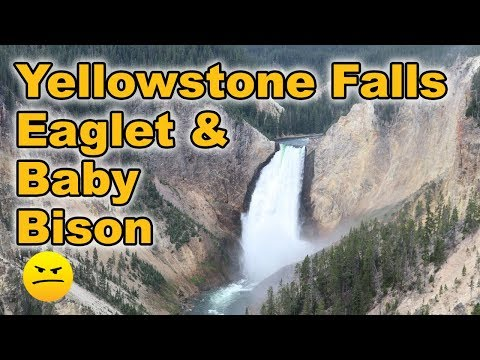 Yellowstone Waterfall, Mud Geyser, Baby Bison, & A Motorcycle Gang