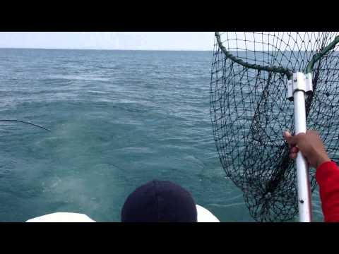 Chicago Fishing Charters May 26th 2013