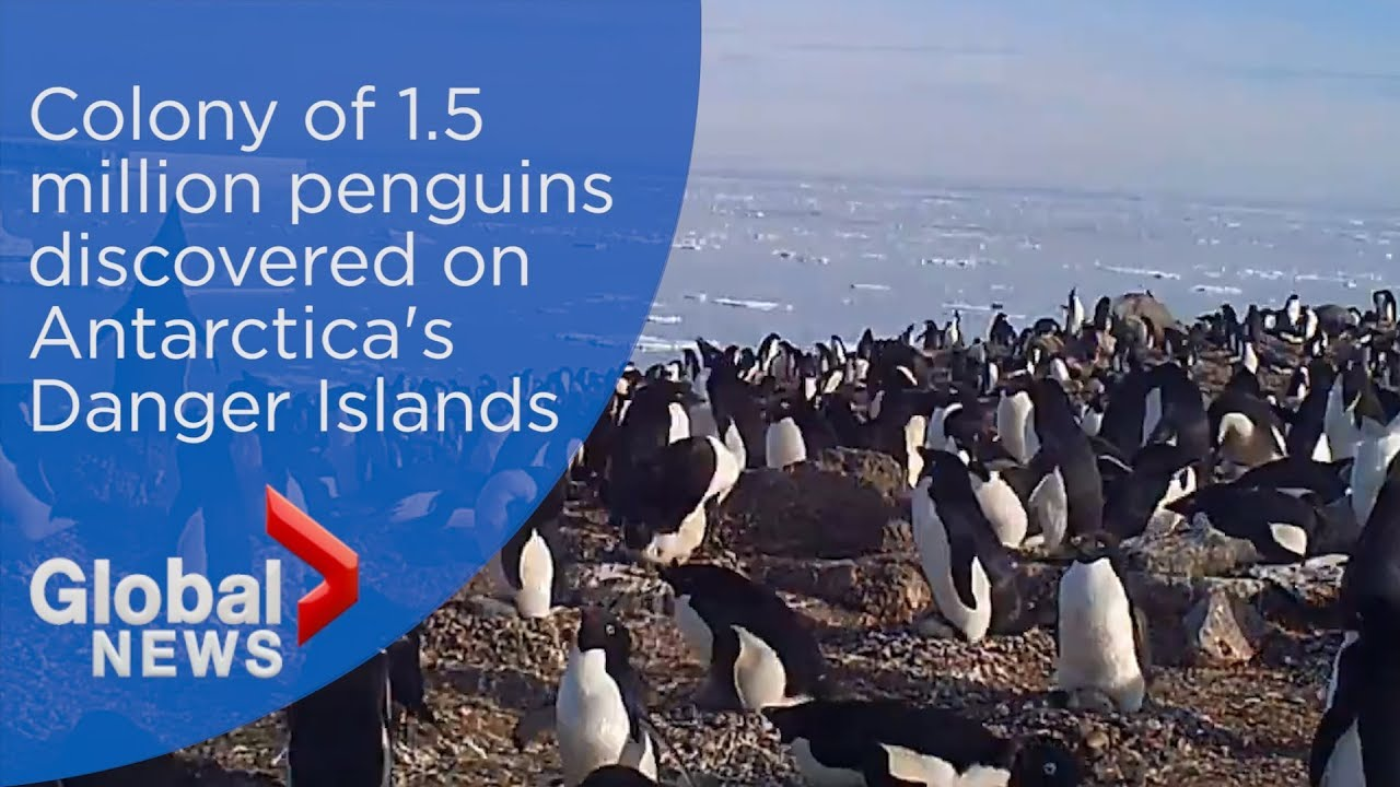 A remarkable penguin 'supercolony' of over 1.5 million birds has been discovered off the coast of Antarctica  take ...