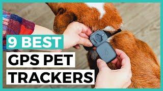 Best Gps Pet Trackers in 2021 …