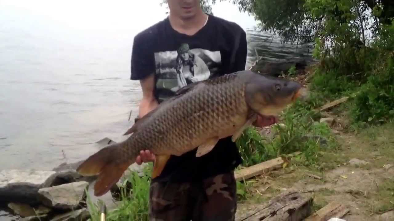 Carp fishing St Lawrence River Waddington NY - YouTube