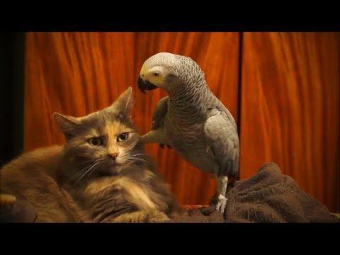 Cute Parrots 🐦😍 Cute Parrots Funny Moments (Full) [Funny Pets]