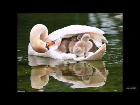 awesome-slideshow-hd-(animals)